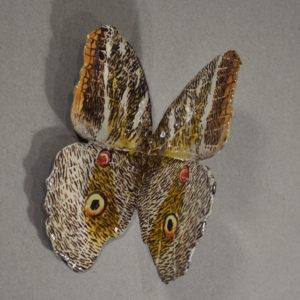 Papillon masqué #1